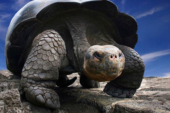 1.There are giants among turtles that weigh several hundred kilograms...