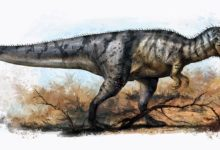 Photo of Yangchuanosaurus – smart Asian warrior