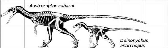 Austroraptor and Deinonychus