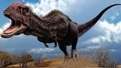Photo of Majungasaurus – the king of Madagascar