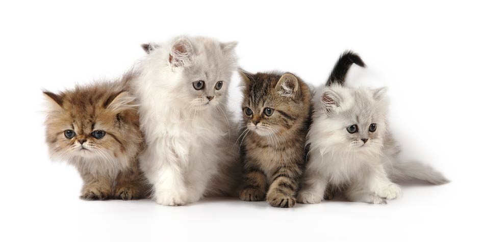 How Much Do Cats Dogs