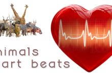 Photo of Heart rates of animals TOP 10
