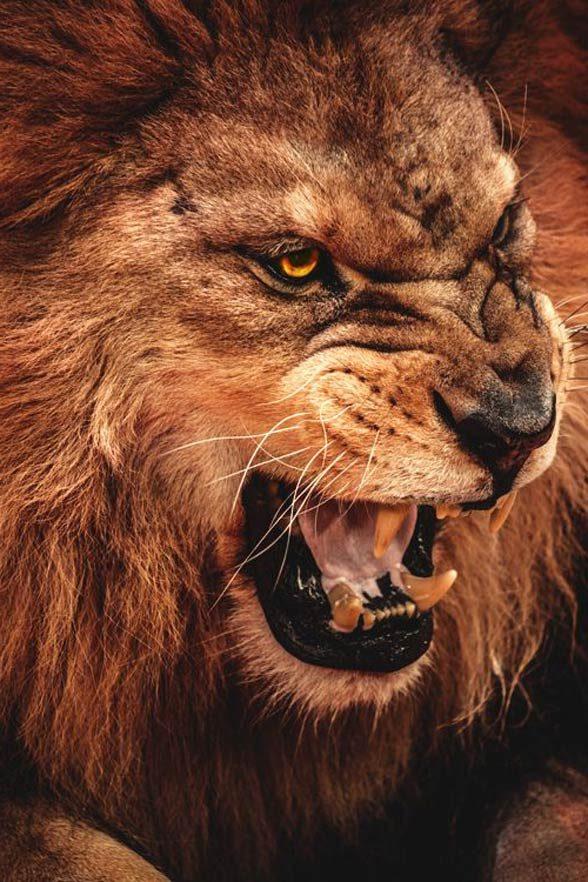famous maneating lions dinoanimalscom
