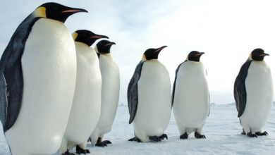 Photo of Penguins – Kings of Antarctica