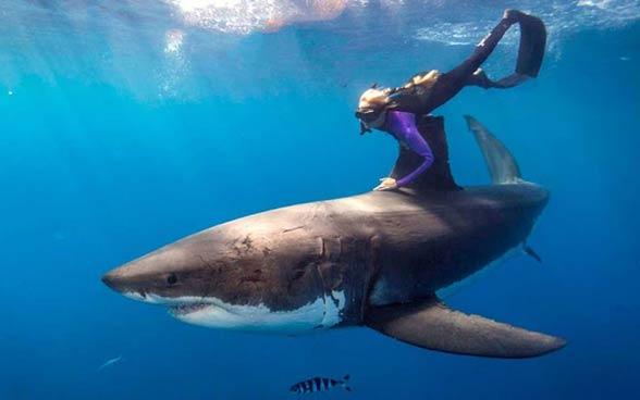 Swimming with sharks, i.e. faint heart never won fair lady...