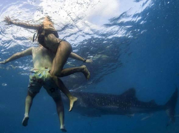 Sharks hardly ever attack people. In the photo: a whale shark that wouldn't hurt a fly.