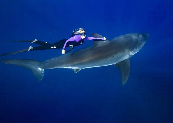 Shark - we admire the courage