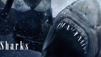 Photo of Sharks – myths and facts