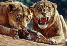Photo of Tsavo lions – Man-Eaters of Tsavo