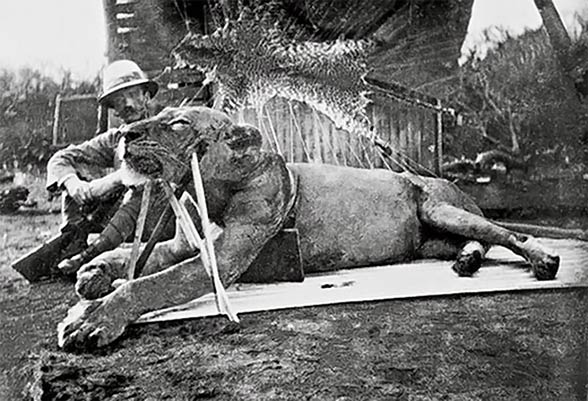 Lieutenant-Colonel John Henry Patterson and the man-eating lion shot by him