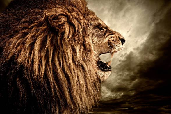 Do you prefer lions with or without manes?