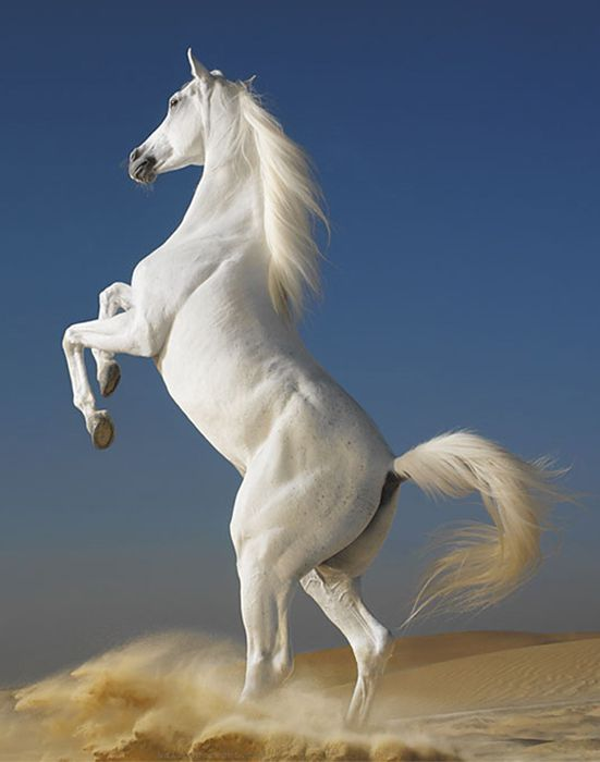 Horses (Equus caballus) - their beauty and grace have always fascinated us.
