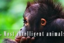 Photo of The most intelligent animals – Top 10