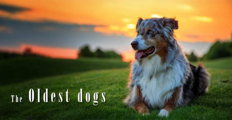 Photo of The oldest dogs – Top 10