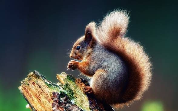 Squirrels are basically self-taught - they learn by observing fellow squirrels, especially when it comes to stealing food.
