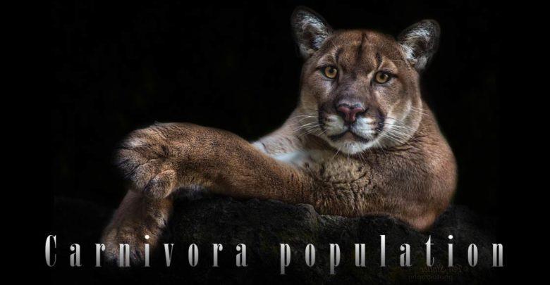Photo of Predatory mammals population