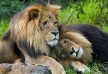 Photo of Homosexual animal behavior