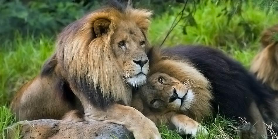homosexuality in animals photos