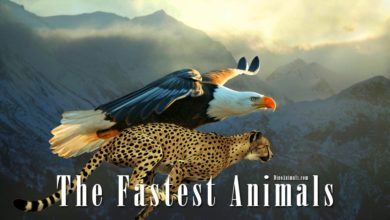 Photo of The fastest animals – birds, mammals, fish, reptiles and insects