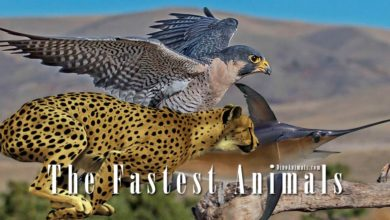 Photo of The fastest animals – on land, in water and in the air