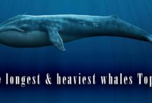 Photo of The longest and heaviest whales – TOP 10