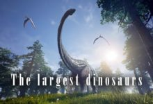 Photo of The largest dinosaurs – TOP 10