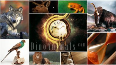Photo of History of animals and plants extinction