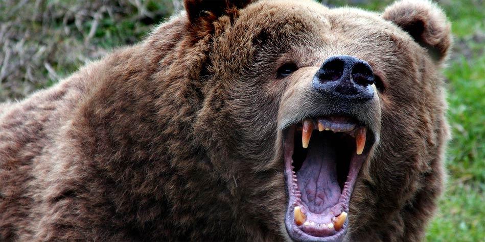 Kodiak – The Largest Brown Bear
