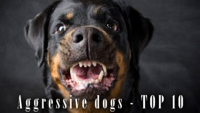 Photo of Aggressive dog breeds – TOP 10