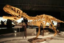 Photo of Huge dinosaurs you've never heard of
