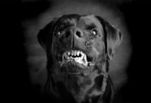 Photo of Black Dog