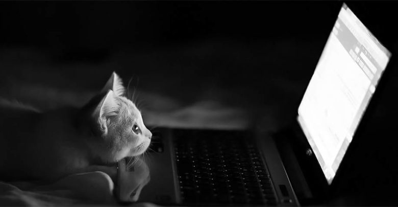 Photo of Cat intelligence
