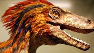 Photo of Deinonychus – terrible claw