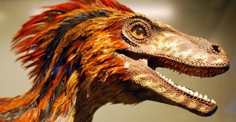 Photo of Deinonychus – terrible claw