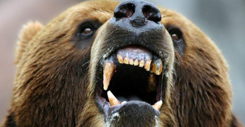 Photo of Man-eaters: Kesagake – a vengeful bear