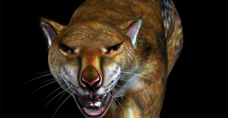 Photo of Marsupial lion – large predatory marsupial