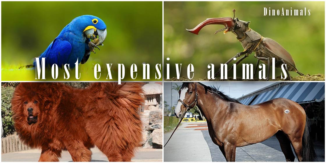 Photo of The most expensive animals – TOP 10