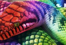 Photo of Aboriginal Rainbow Serpent
