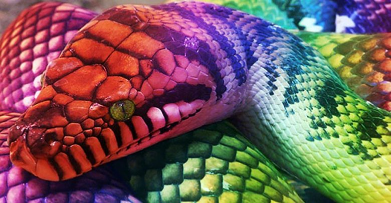 Photo of Aboriginal Rainbow Serpent
