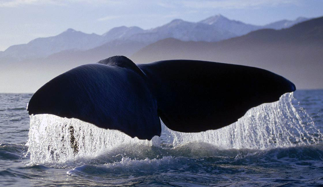 Photo of The deepest diving mammals – TOP 10