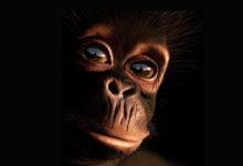 Photo of Chimpanzee – human cousin?