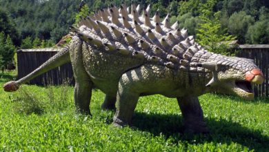 Photo of The heaviest Ankylosaurus Top 10. Weight of Ankylosaurus
