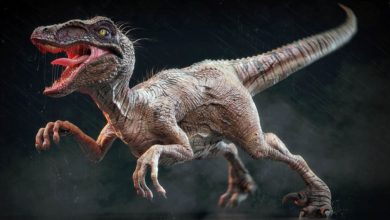 Photo of The largest Raptors (dromaeosaurs) – Top 10