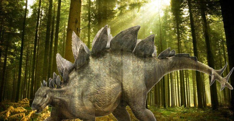 Photo of The heaviest Stegosaurians (Stegosauria) Top 10