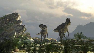 Photo of Carnosaurs – the largest predators among dinosaurs
