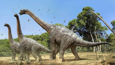 Photo of Brachiosaurus – huge herbivorous dinosaurs
