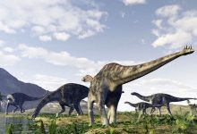 Photo of The first discovered dinosaurs – Cetiosaurus