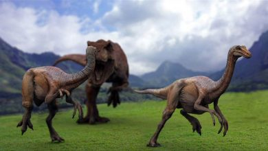 Photo of The fastest dinosaurs – Gallimimus