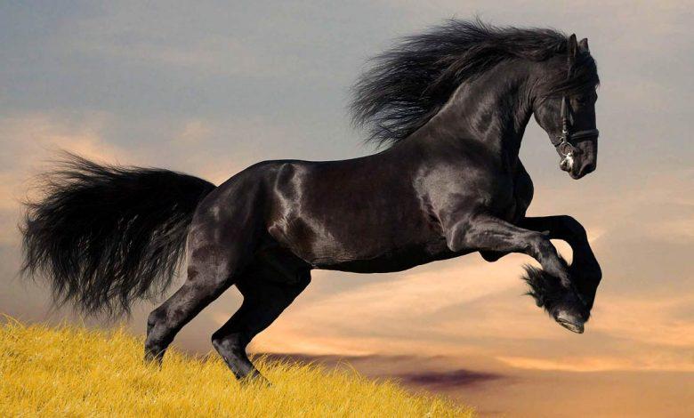 Photo of Horse – man's friend