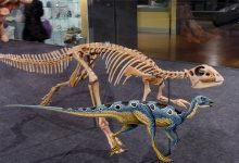 Photo of The fastest dinosaurs – Hypsilophodon